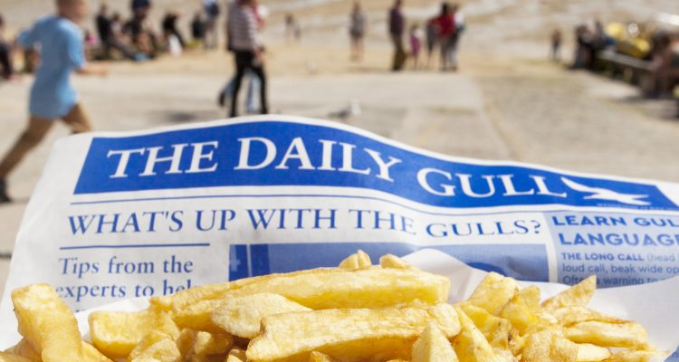 DCA 'Daily Gull' campaign shortlisted for industry award.
