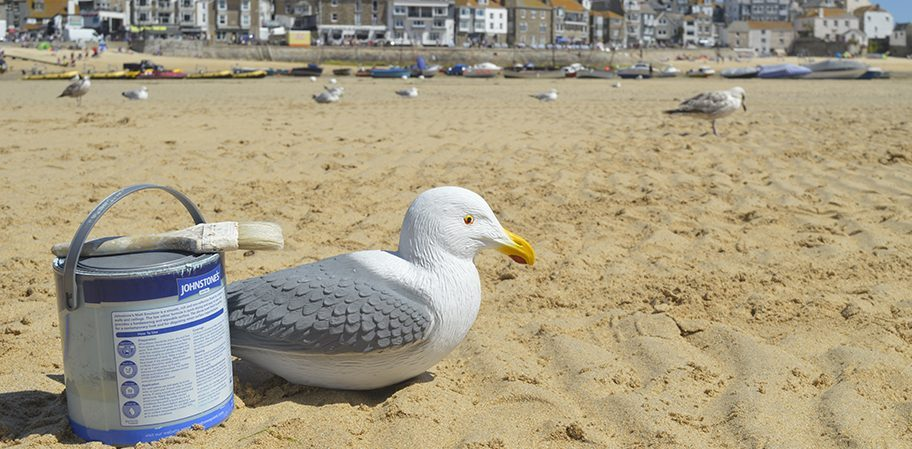 St Ives Seagull Campaign
